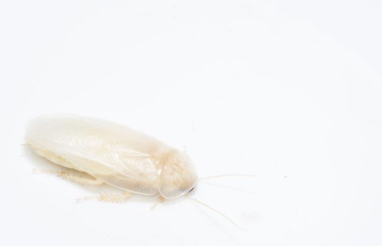 別れた恋人の名前をゴキブリにつけてミーアキャットに食わせるバレンタインイベント