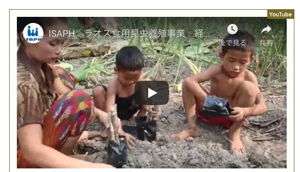 ラオス昆虫養殖普及事業 経過報告動画が公開されました。